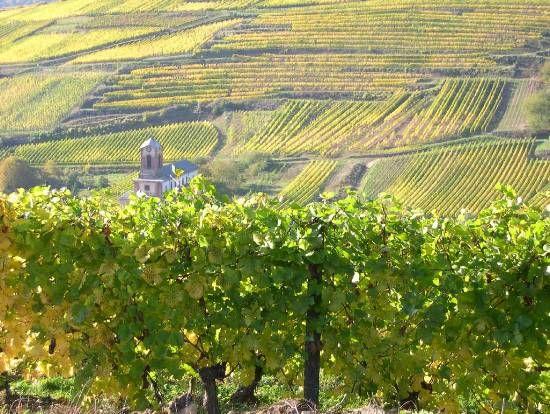 Los viñedos en Burdeos