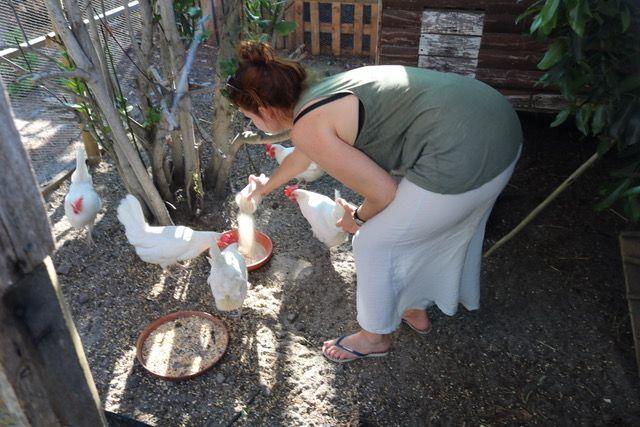 Las gallinas de Karen