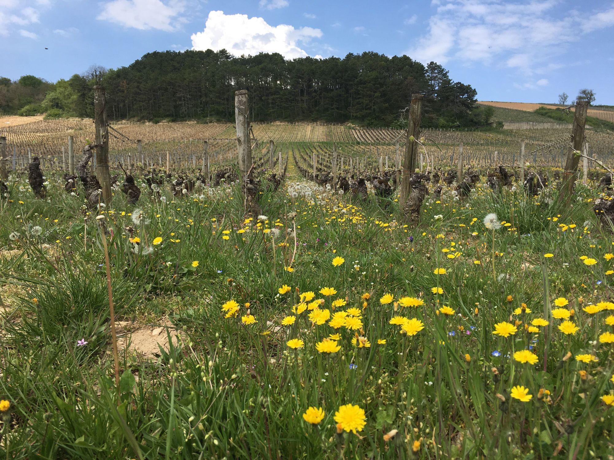 Zona_Rural_en_Borgoña_intercambio_de_Casa
