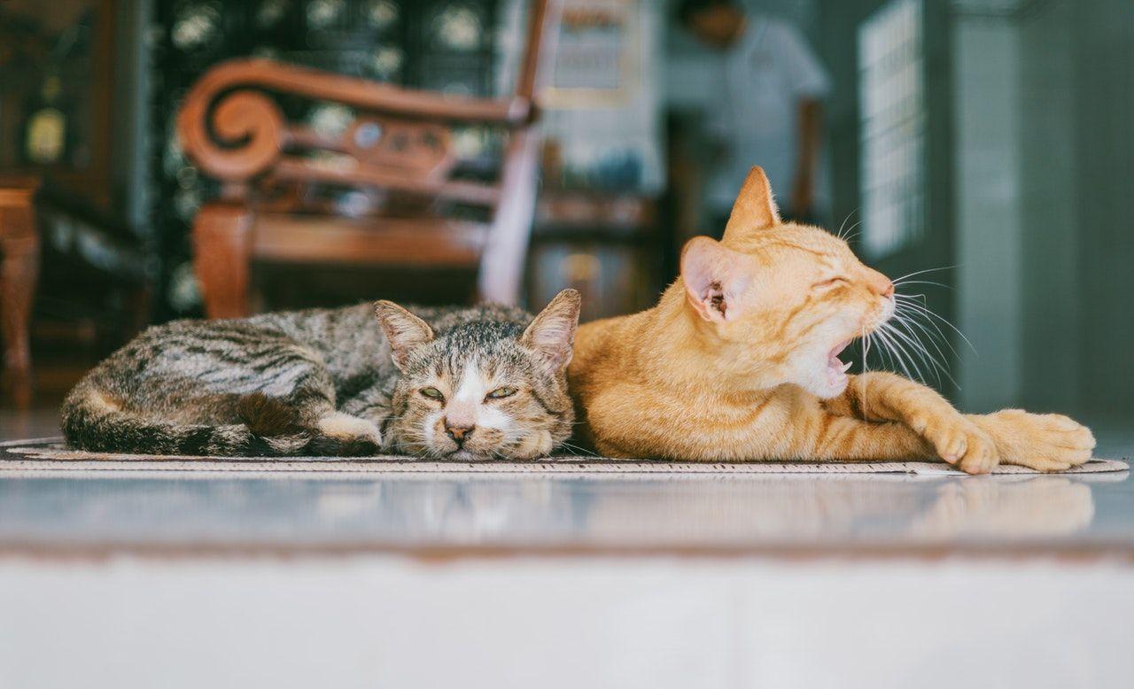 mascotas_HomeExchange
