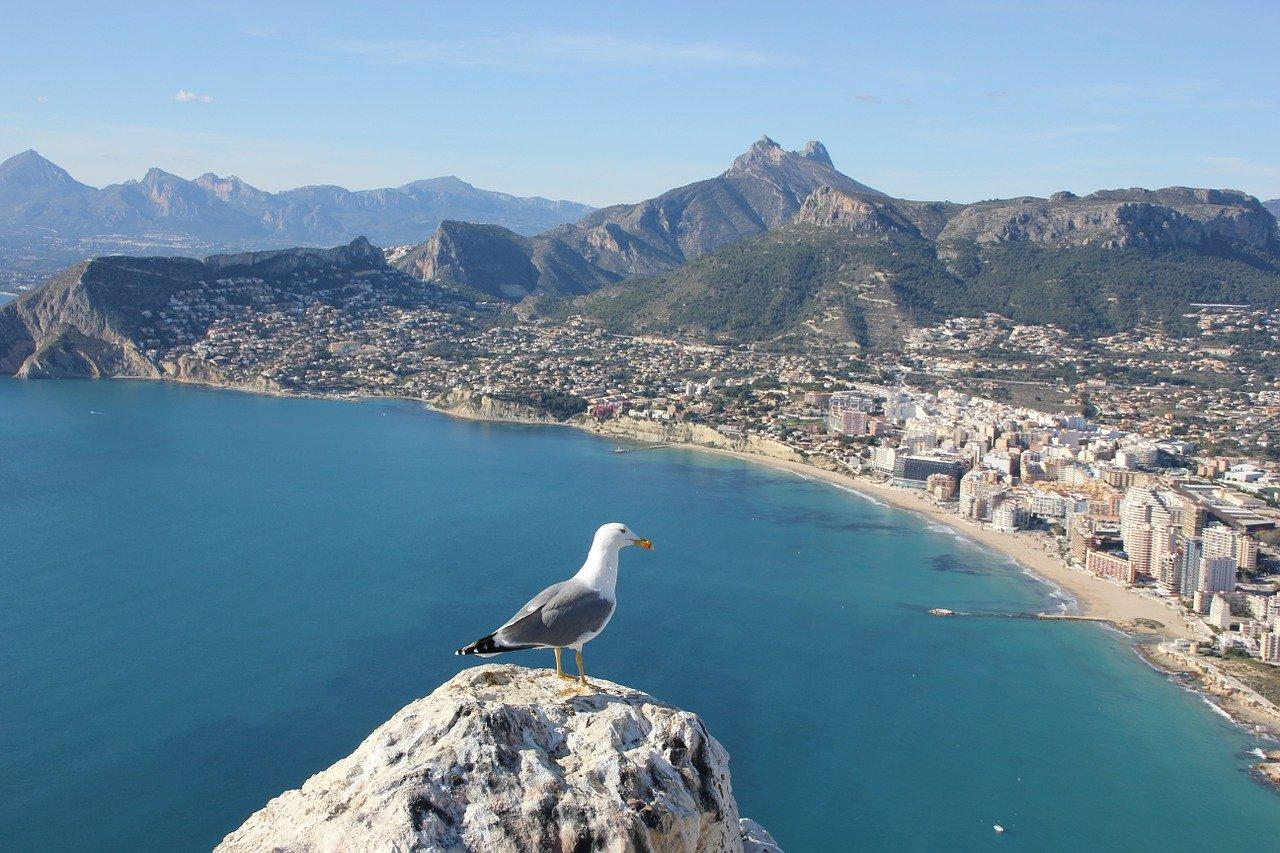 Alt Que-hacer-en-Alicante_Calpe_gaviota, tittle Que-hacer-en-Alicante_Calpe_gaviota