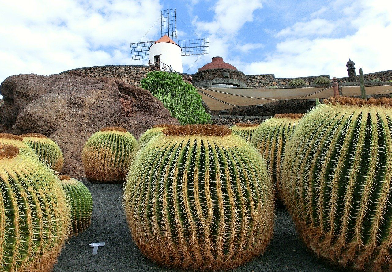 Alt lanzarote-jardin-del-cactus, Title lanzarote-jardin-del-cactus
