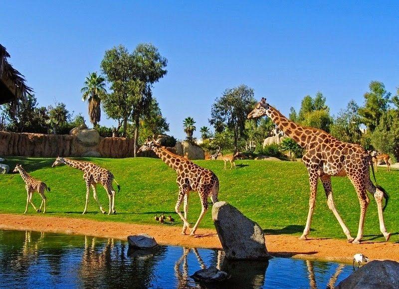 Alt bioparc-valencia-zoo-espana-3, title bioparc-valencia-zoo-espana-3