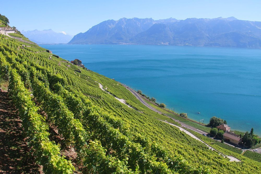 lavaux-suiza-viñas-viñedos-vacaciones-veranillo del membrillo -intercambio de casas