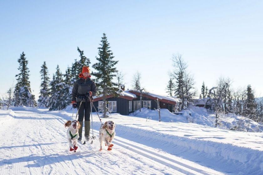 Alt viajar-en-invierno_nieve_perros, title viajar-en-invierno_nieve_perros