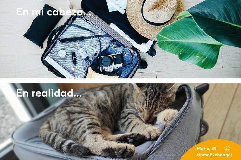 Alt la-maleta-preparada_gato_HomeExchange, title la-maleta-preparada_gato_HomeExchange