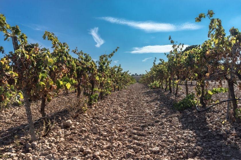 alt La-Rioja_briones_vacaciones-de-verano_intercambio-de-casas_vid, title La-Rioja_briones_vacaciones-de-verano_intercambio-de-casas_vid