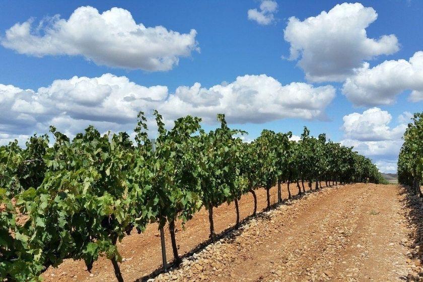alt La-Rioja_Briones_vides_vino_vacaciones-en-Espan-a, title La-Rioja_Briones_vides_vino_vacaciones-en-Espan-a