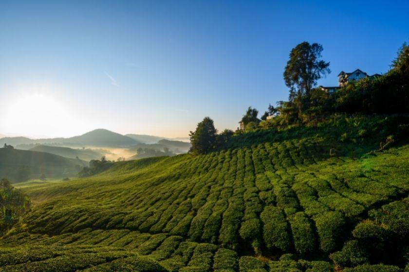 alt Malasia-con-ninos_vacaciones-en-familia_intercambio-de-casas, title Malasia-con-ninos_vacaciones-en-familia_intercambio-de-casas