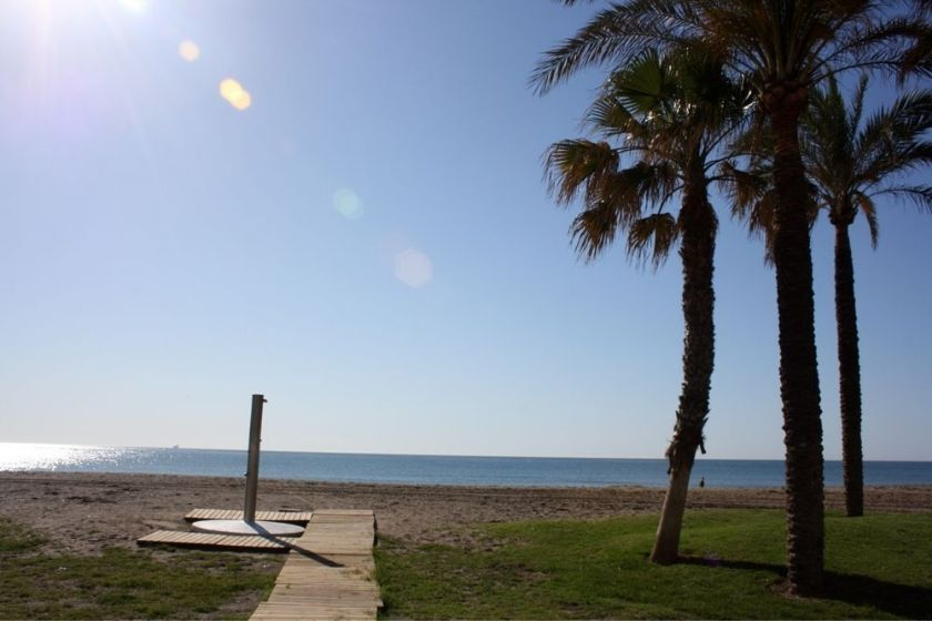 alt paseo-maritimo-malaga_palmeras, title paseo-maritimo-malaga_palmeras